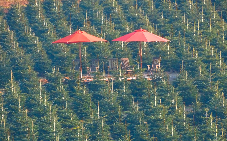 Unsere Gut Diepensiepen Lounge – exklusiv für Tannenbaum-Events